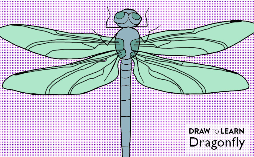 How to Draw a Dragonfly Worksheet