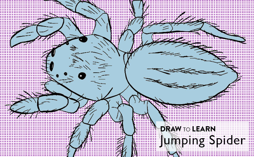 How to Draw a Jumping Spider Worksheet