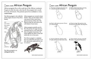 How to Draw an African Penguin Worksheet