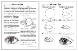 How to Draw a Human Eye Worksheet