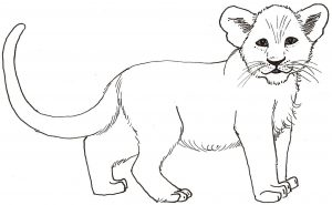 How to Draw an African Lion Worksheet