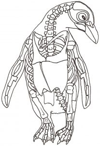 how to draw an African penguin, skeleton drawing