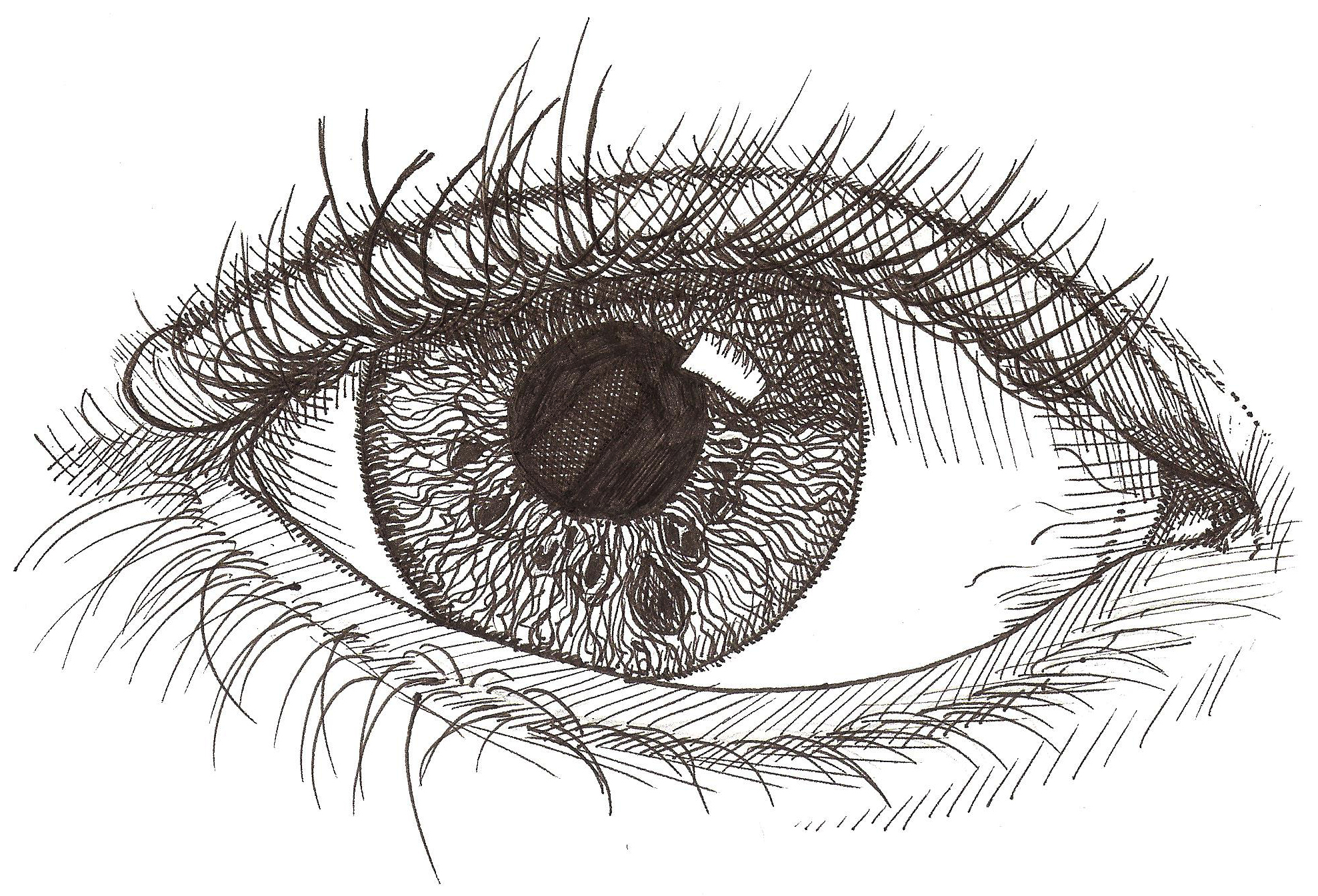 How to draw a human eye sketch of the human eye in detail