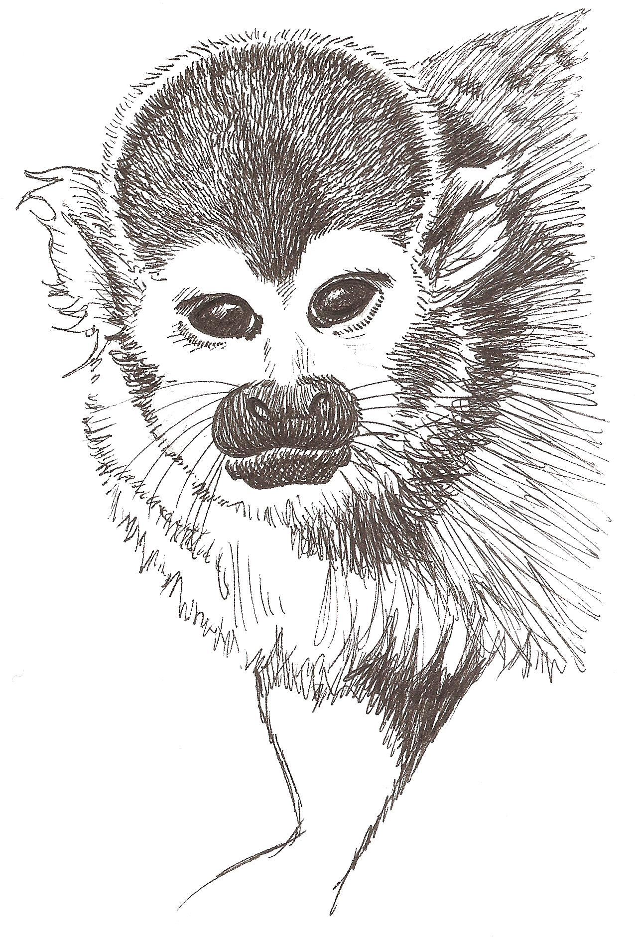 how to draw a squirrel monkey worksheet draw to learn