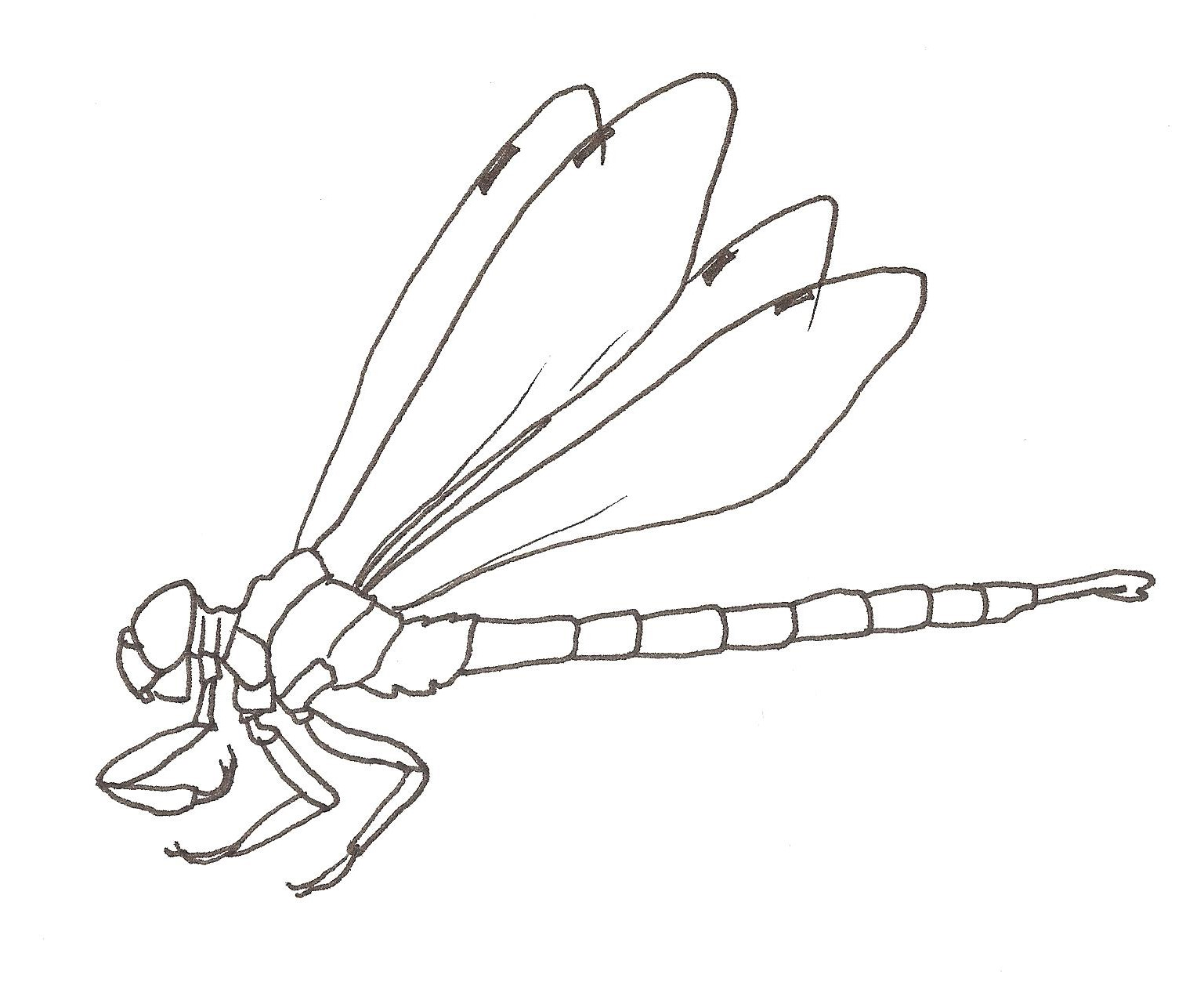 How to Draw a Dragonfly Worksheet - Dawn\'s Brain