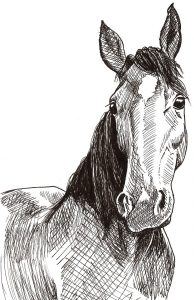 how to draw a horse worksheet